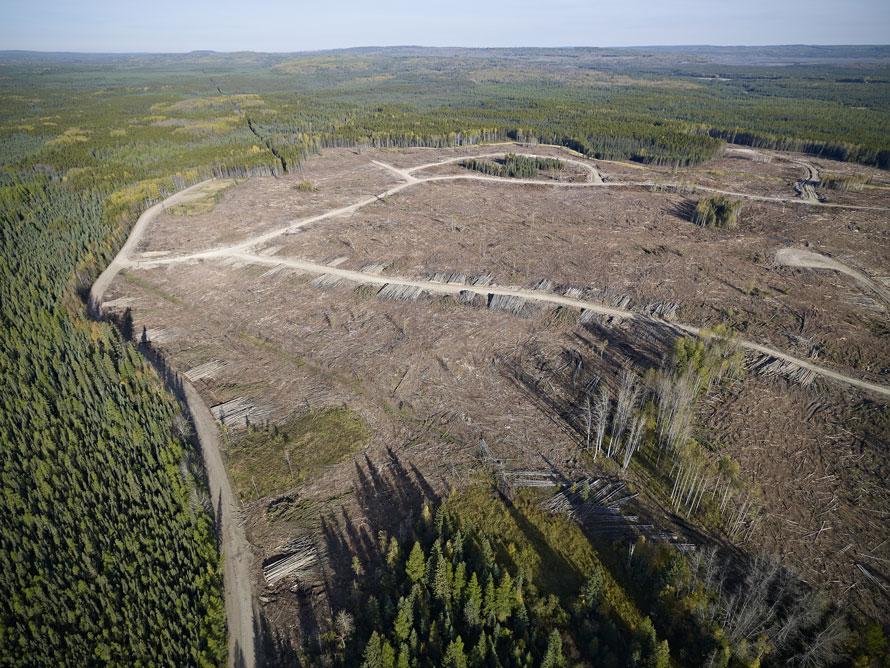 Block shapes mimic natural disturbances such as forest fires.